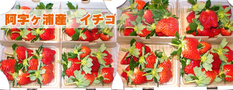 阿字ヶ浦産イチゴ